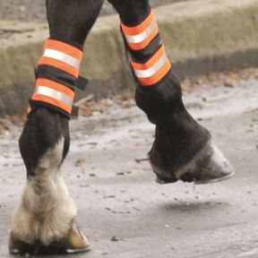 Equi safety Leg Boots
