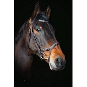 Cameo Performance Anatomic Bridle