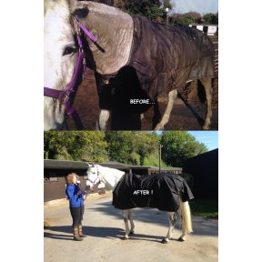 TURNOUT RUG STANDARD NECK WASH