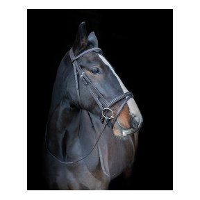 Cameo Equine Core Collection Comfort Bridle